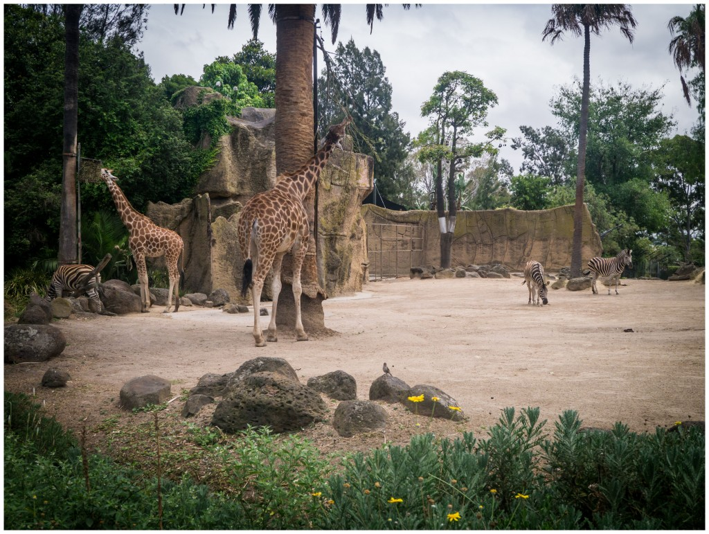 Melbourne Zoo (7 of 13)