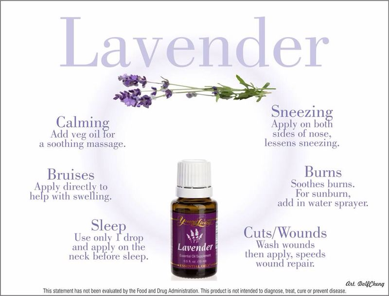 Young Living Essential Oils My Carry Along Oil Kit