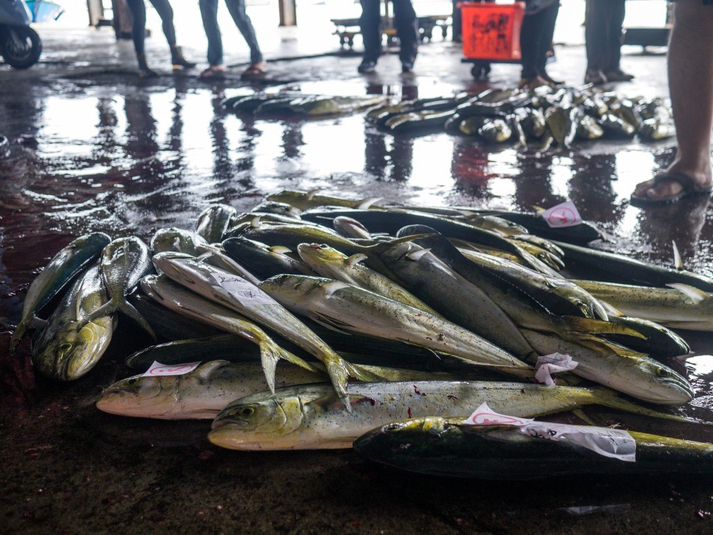 Taiwan Holidays Fish Auction (6 of 7)