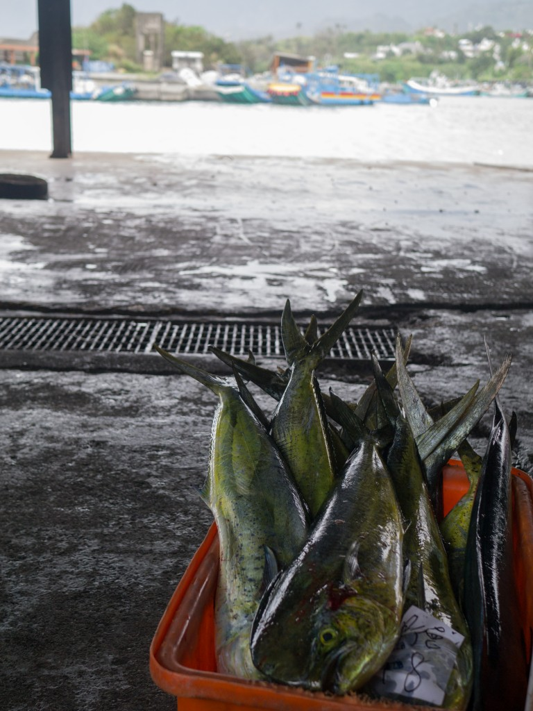 Taiwan Holidays Fish Auction (7 of 7)