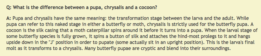 Difference between Pupa, Chrysalis, and Cocoon